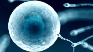 Photo of Sperm Düşüklüğü